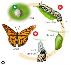 beril-aytac-blog-resim-63