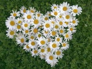 çiçekler Beştepe Bloggers