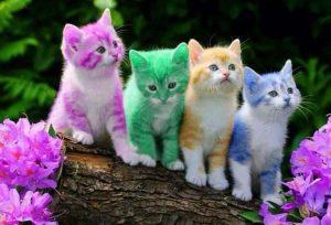 renkli-kediler