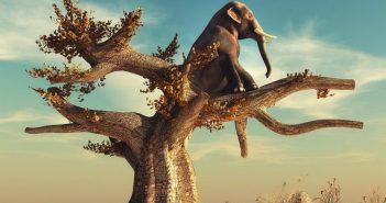 filler-agacta-yasasa-ne-olurdu