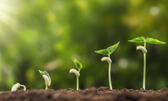 Planting The Seed For a Better Generation